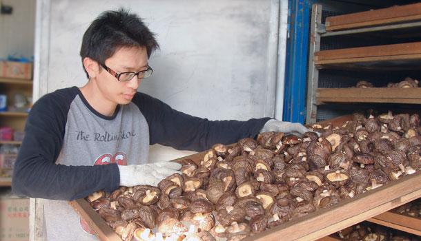 樂果村香菇農園