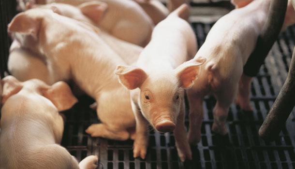 哪里可以买到安全肉品?