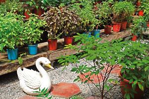 公寓變花園  【懶人植物2】香草