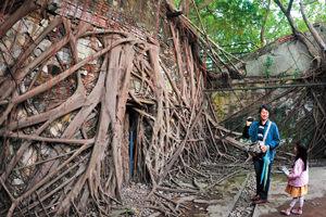 台南安平樹屋 屋與樹共生的樂園