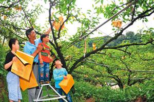 食農小旅行:拜訪東勢 與寄接梨做朋友