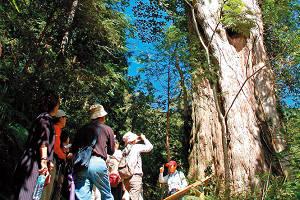 循著課本去旅行 宜蘭馬告‧生態公園拜訪昆蟲