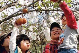 走訪甜柿、草莓正豐收的大湖鄉