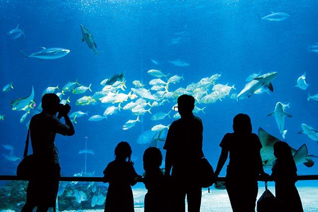 遠雄海洋公園:在東海岸,與海豚共眠
