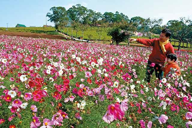 桃園大溪花海農場:移植北國與南歐的美麗