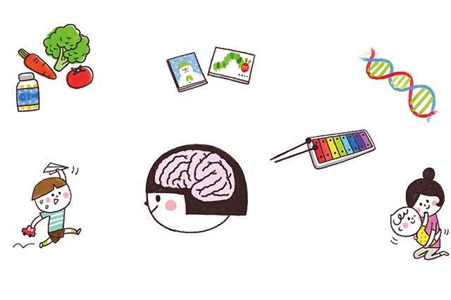 掌握6要素  長出聰明大腦
