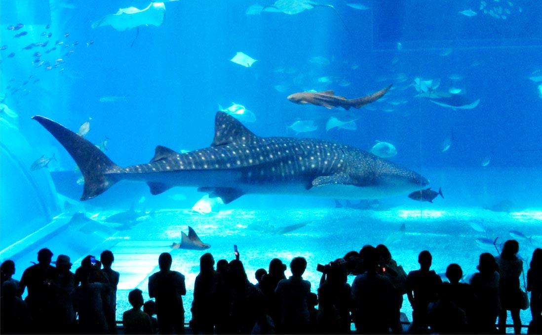 你的歡笑聲,是牠們的地獄──四面環海的台灣,水族館從來不是「必要之惡」