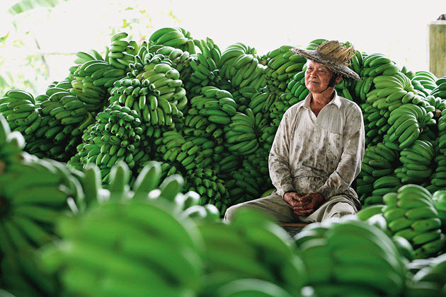 Taiwan: The Disappearing Kingdom of Fruit|Insight|2010-08