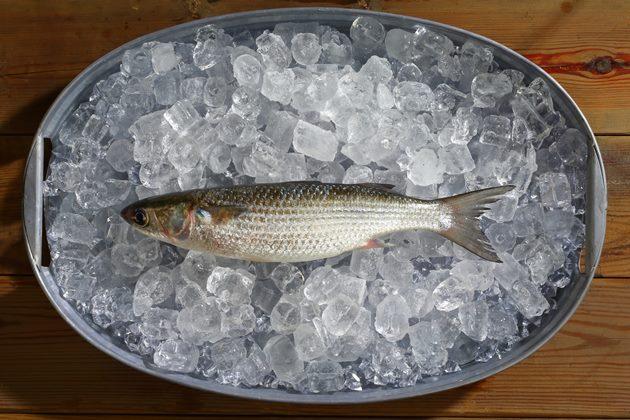 【幸福台灣味,60好食材】烏魚 1000天漫長等待,守住大海的誓言