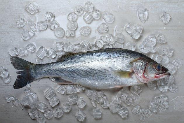 【幸福台灣味,60好食材】七星鱸魚 台灣「開刀魚」,一場美麗的誤會