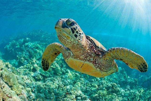 減香前先減塑 救海龜也救政客
