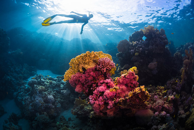 保險無奇不有 這張保單的被保險人:珊瑚礁