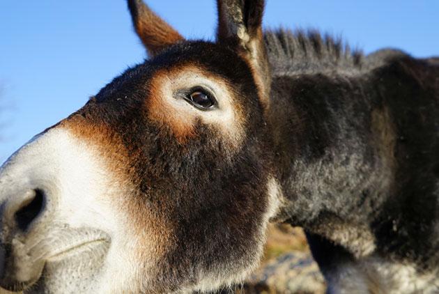 中國做中藥用太兇,牽動肯亞驢子半年貴3倍