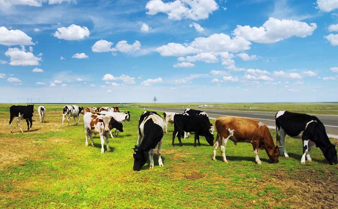 「五頭牛換一套房」──我在內蒙古,體會全然不同的價值觀