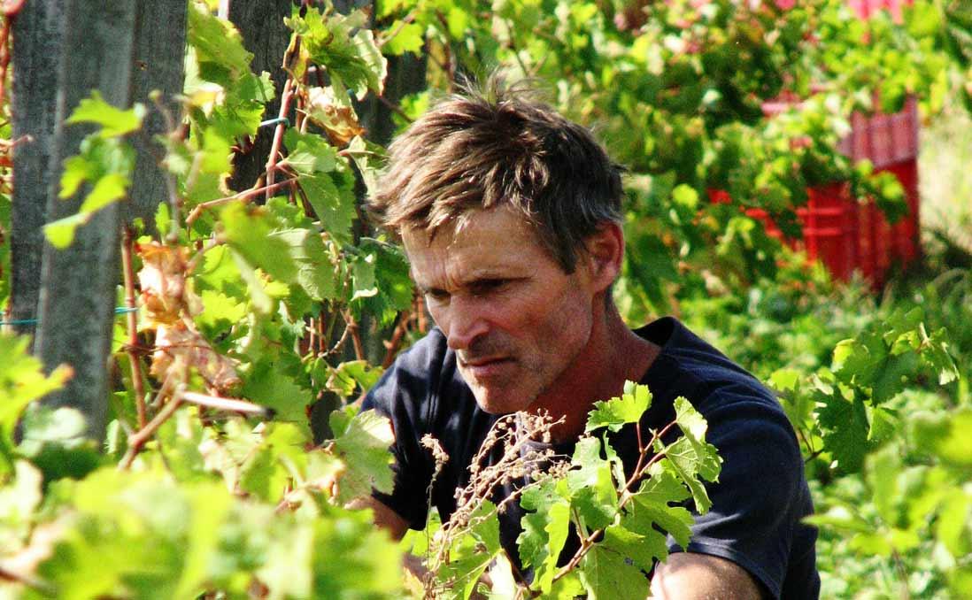 你可曾知道,他不是不夠努力?──身處澳洲的葡萄園,明瞭那些人被體制遺忘的處境